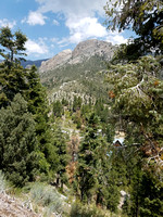 Mount Charleston NV - July 2018